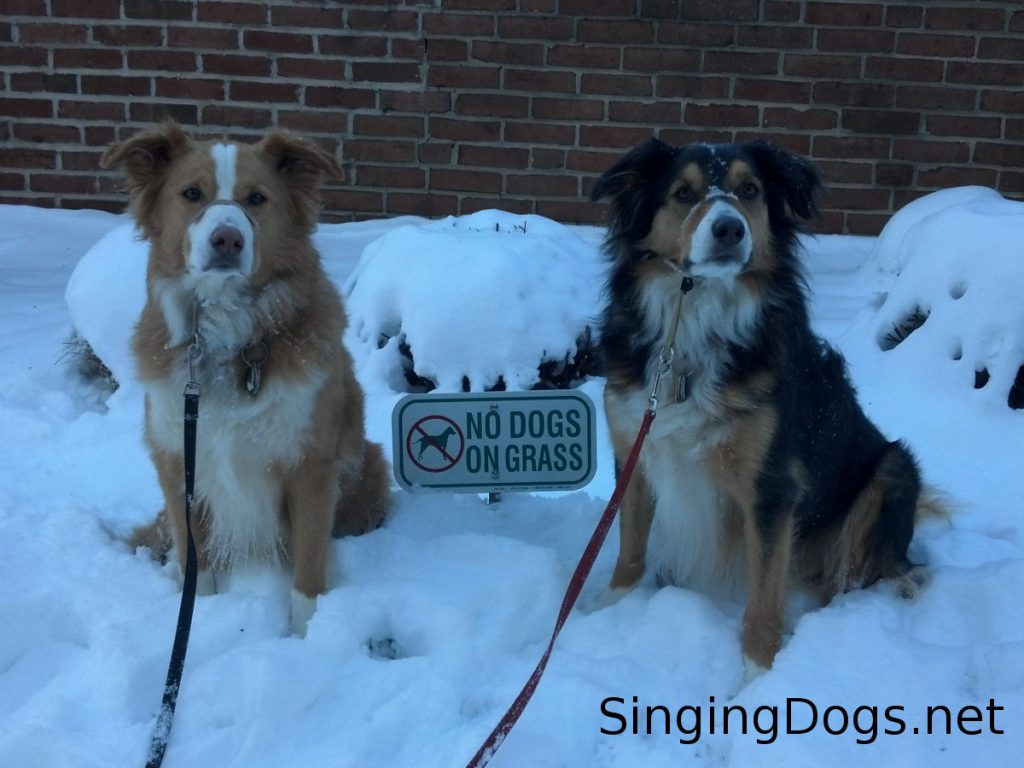 no dogs on grass snow