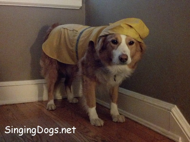 cody raincoat